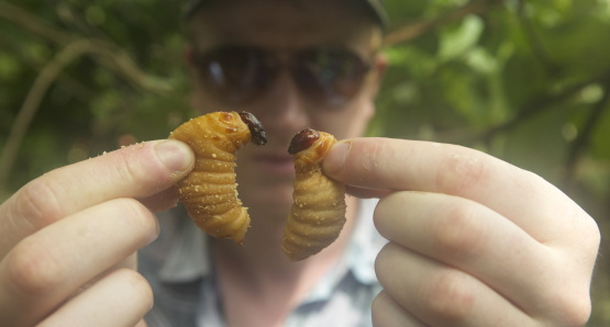 Ben with Palm Weevil Larvae. Photo by Andreas Johnsen, courtesy Kino Lorber.